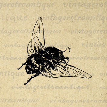 Bumblebee Printable Image Graphic Antique Bee Download Illustration Digital Vintage Clip Art for Transfers etc HQ 300dpi No.1792
