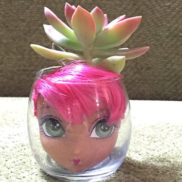 Graptosedum California Sunset Succulent in Repurposed Doll and Glass Modern Planter Pot