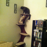 "Corner Climbing Cat Tree Tower For Active Kitties, 68"" high with stepped ,cushioned platforms . Real Wood."