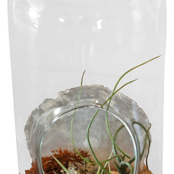Large Cylinder Airplant Terrarium