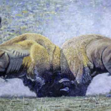 Bison Fight Original Oil Painting 60x36x1.5 Inch