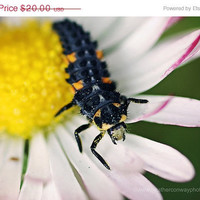70 CLEARANCE Strange Bug on a small Daisy by HConwayPhotography