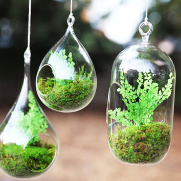 Set of 3- Hanging Fern and Moss Glass Terrarium - Care Free, Real Preserved Plant.