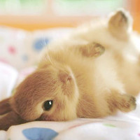bunny - Google Search