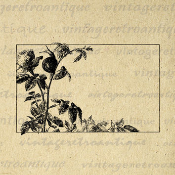 Digital Graphic Frame with Rose Flower and Snail Image Box Border Printable Download Vintage Clip Art for Transfers etc HQ 300dpi No.3633