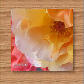 Roses 8x8 yellow orange coral nature print, flower photo sunset rose wall art, wedding feminine home decor stock lane studiodailyetsysales