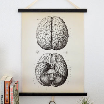 Vintage Anatomy Pull Down Chart Reproduction. by curiousprints