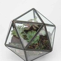 Turning Triangles Terrarium-