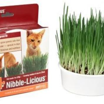 Nibble-Licious Cat Grass Kit