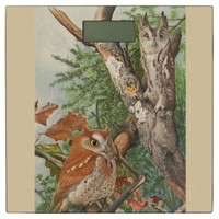 2 angry vintage owls in a tree bathroom scale