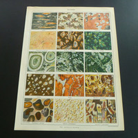"""Antique geology print about rock 1905 old poster with pictures of rocks stone mineral Gneiss Granite Pegmatite Jasper Variolite 23x31c 9x12"""""""