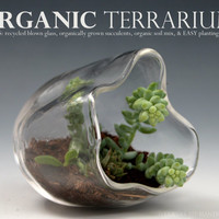 Organic Terrarium, Recycled Glass Terrarium, Organic Succulent Garden, Blown Glass Terrarium, Table Terrarium