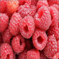 Raspberry Red Bush Seeds (Rubus idaeus) 25+ Seeds