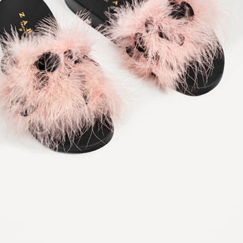 FEATHERS SLIDES