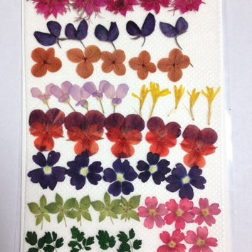 Real pressed flowers - Small presssed flowers - 55 pieces, jewelry making, DIY greeting cards, scrap booking, stained glass, invitations