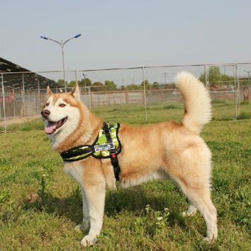 Dog Harness Vest with Hand Strap