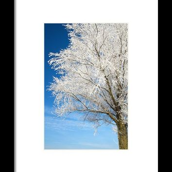 Tree Covered With Snow And Frost. Framed Print By Jan Brons