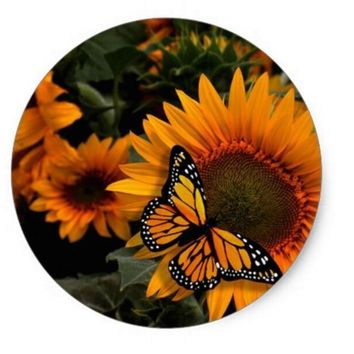 1.5inch Sunflower Radiance Monarch Butterfly Classic Round Sticker