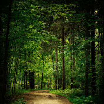 Forest Decor Photography Green Wall Art Woodland Landscape Woods Trees Emerald Dark Magical - 8x10 - Jade Forest Path Green Home Decor.