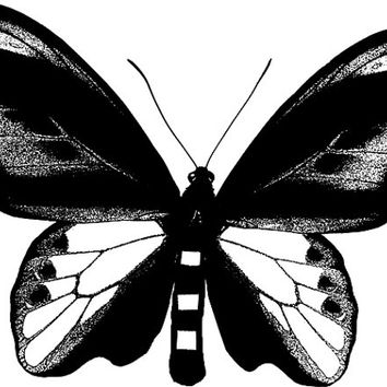 big butterfly moth Digital Image Download art graphics insects bug nature printables black & white art for cards t shirts pind buttons etc