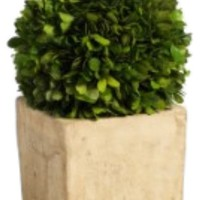 Zodax Carina Topiary Decoration | Nordstrom