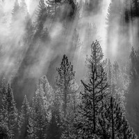 Black and White, Lake Tahoe Large Print, California Forest Canvas, Misty Forest Art, Mountain Light, Canvas Wrap, Sierra Nevada, Wall Decor