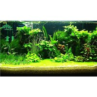 hot sale genuine mixed aquarium plants seeds water grass Plants fish tank aquarium decoration grass seed for home Aquarium
