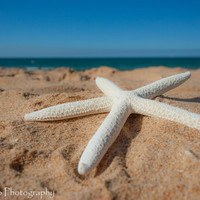 "Beach Photography, Starfish Print, Summer Photography, Ocean Print, Blue print, Seascape,  Beach photo - 8x12 Photograph ""Starfish"""