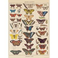 French Butterfly Nature Chart Vintage Style Poster