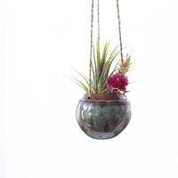 Small Hanging Planter for Air Plant in Gun Metal Green MADE TO ORDER