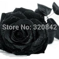 100 Seeds China Rare Black Rose Flower Lover DIY Plants Home Garden Rare Black Rose Flower Seeds Free Shipping