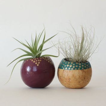 Air Plant Planter Duo with Air Plants - Plum, Teal, Gold & Natural.