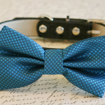 Royal Blue Bow Tie attached to collar, Wedding idea, Pet Wedding Accessories