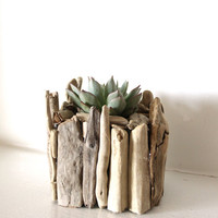 Driftwood Handmade Indoor Planter