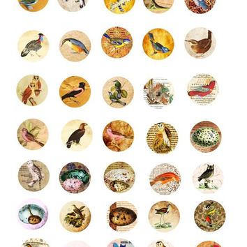 birds bird egg parchment paper old book pages animal clip art 1 inch circles collage sheet