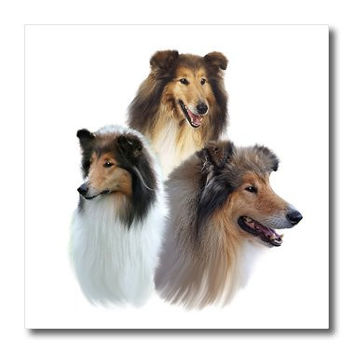 """3dRose ht_4543_1 Rough Collie-Iron On Heat Transfer, 8 by 8"""", For White Material"""