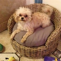 Wicker Dog Bed - Small Pets | Wicker Paradise