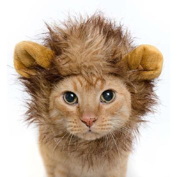 DOG/CAT Lion Hair Mane Ears Head Cap