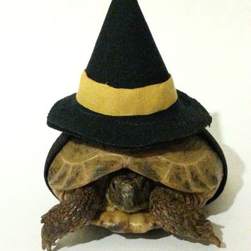 Tortoise Costume, Pet Costume, Witch Hat, Witch Costume, Turtle Costume