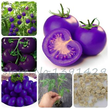 Purple sacred fruit tomato seeds vegetables fruits / packing garden * plants bonsai
