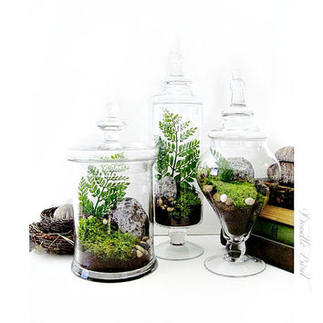 Terrarium Set: 3 Large Decorative Apothecary Jar Terrariums Wedding Centerpiece Gift Set