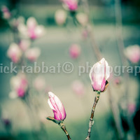 Magnolia Tree In Bloom Instant Digital Download Fine Art Photography Macro Close-Up Pink Flower Photography Spring Photo