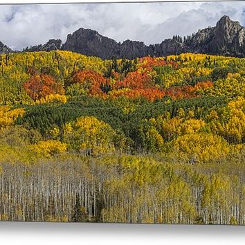 Colorado Kebler Pass Fall Foliage Metal Print