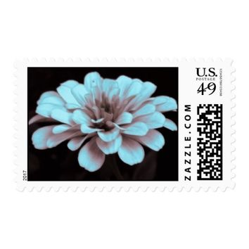 Misty hazy subtly tinted zinnia photo Postage