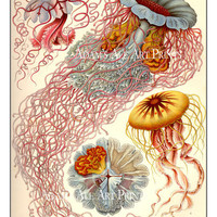 "Ernst Haeckel Sea Theme Art Print 12"" x 16"" Ethereal Jellyfish In Pinks, Yellows, And Blue Wall Poster"