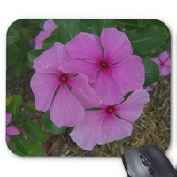 Three Pink Periwinkle Blooms. Mouse Pad
