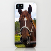 Brown Horse iPhone & iPod Case by Deb Adkins
