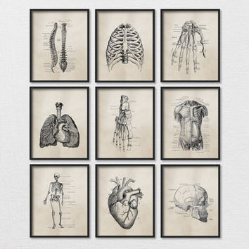 "Set of Nine Art Prints - 8x10"" or 11x14"" Science Anatomy Wall Art, Neutral Tan, Vintage Style, Medical Student Gift, Doctor's Office Decor"