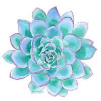 Succulent Watercolor Painting - 11 x 14 - Teal Giclee Print - Botanical