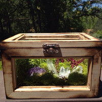 Terrarium Alter Box Crystal Garden Crystal Terrarium Moss and Crystals Healing Crystals and Stones Metaphysical Crystals Moss Box